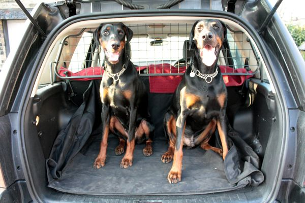Doberman Transport